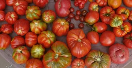 Važno je očuvati sjeme starih sorti voća i povrća