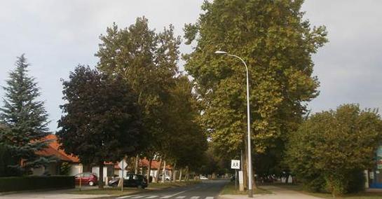 Sakaćenje parkova - pa kome smeta drveće?