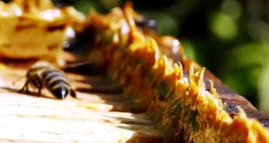 Zdravlje iz propolisa