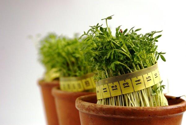 Mršavite s biljkama