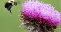 Sikavica – sveti gral u sprječavanju raka kože