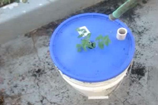 Bez zalijevanja - urbani vrt u plastičnim kantama