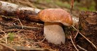 Gljivarenje v Stubakima 2013.