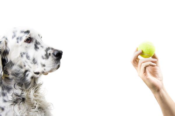 Kako odabrati savršenu aktivnost za psa?