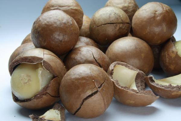 Ulje makadamije ne ostavlja masni trag i idealno je za izradu krema