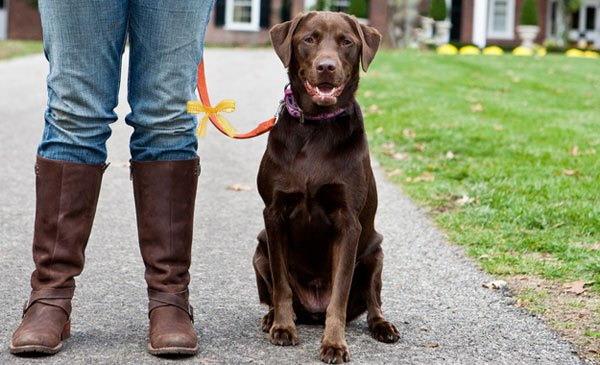 Projekt Gulahund Žuti pas - jer psu ponekad treba prostora