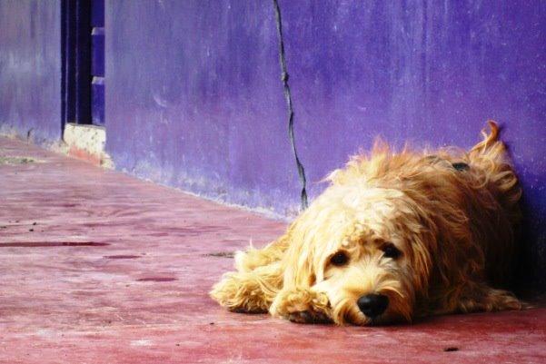 Zlostavljanje životinja je kazneno djelo!