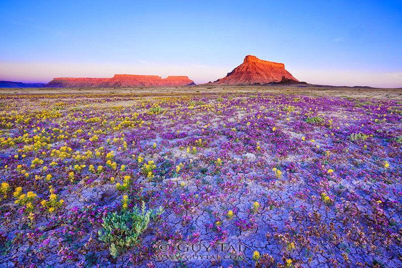 Kad se pustinja pretvori u rajski vrt...
