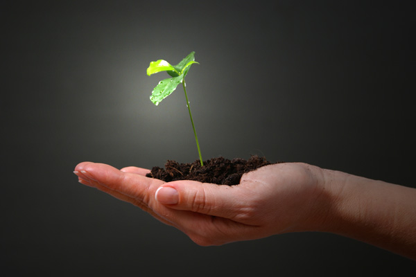 Permakultura - održivi vrt, zbrinuta zemlja