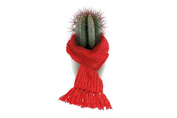 Kaktus u grlu?