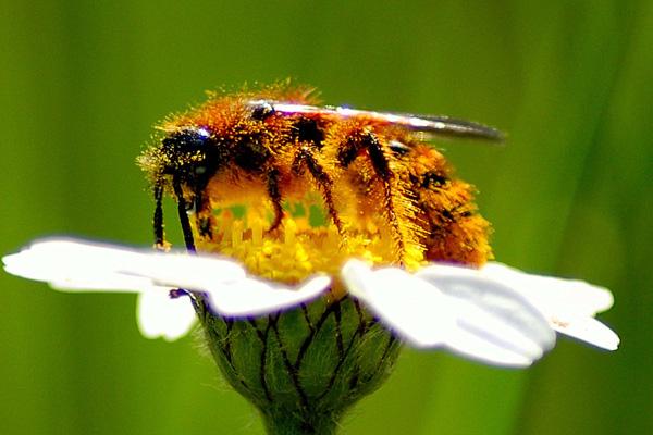 Pčelinji proizvodi - spas za suncem oštećenu kožu