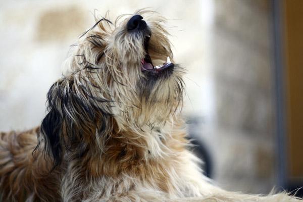 Često griješimo u radu s psima
