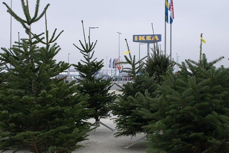 IKEA poziva: Reciklirajte božićna drvca