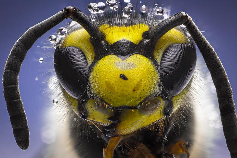 Eterična ulja pomažu kod uboda insekata