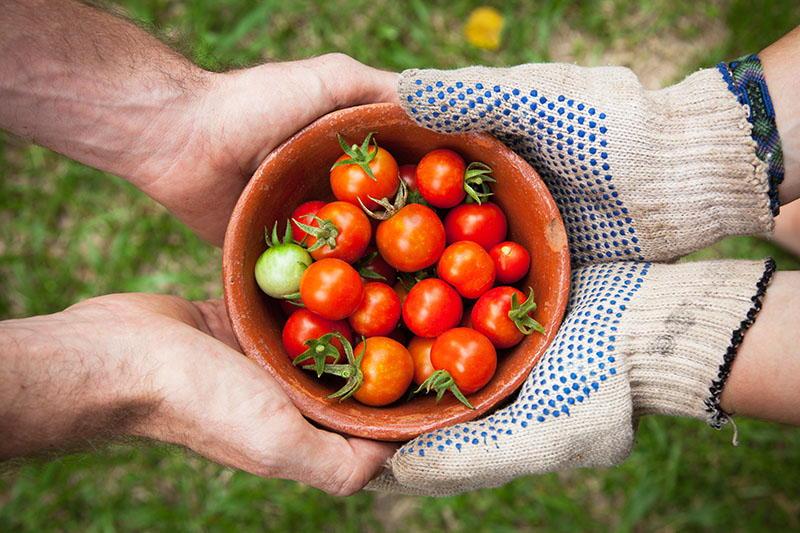 Kako vegetarijanci mogu usporiti klimatske promjene?