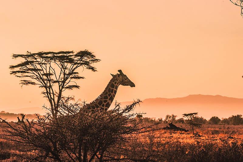 Ako već niste, vrijeme je da dodate Keniju na svoju travel-listu