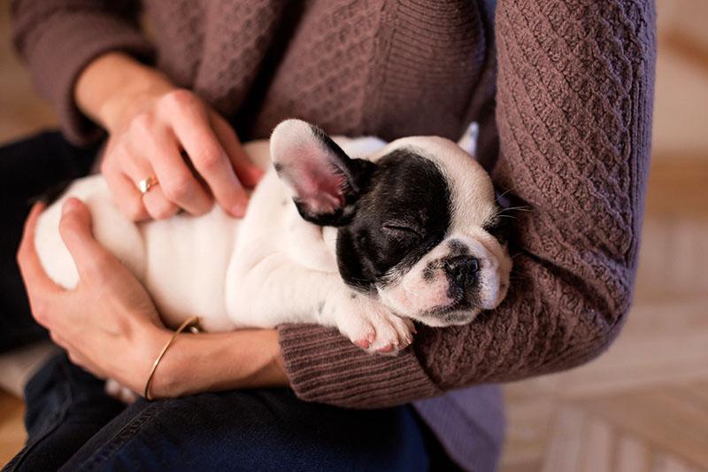 Volite li pse? To bi moglo biti zapisano u vašem genetskom kodu