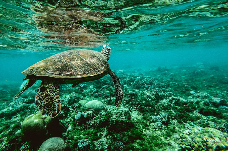 Zbog djelovanja čovjeka više od milijun vrsta je pred izumiranjem, upozorava UN