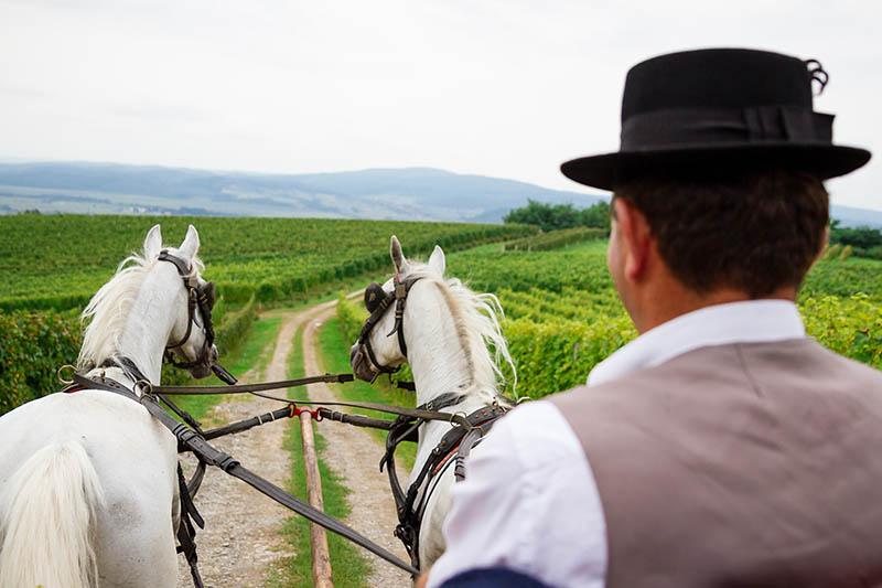 Zašto je lipanjski roadtrip u Pleternicu tako dobra ideja?