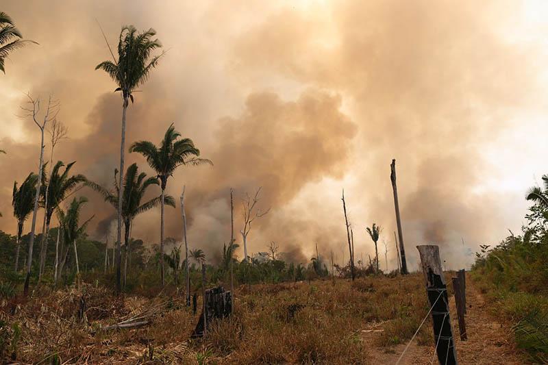 Leonardo DiCaprio donira 5 milijuna dolara za spas Amazonije. Što mi možemo učiniti?
