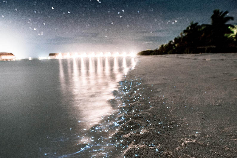Čaroban prirodni fenomen: Jednu plažu na Maldivima krasi 'more zvijezda'