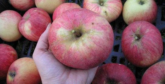 Spremite plodove za zimu
