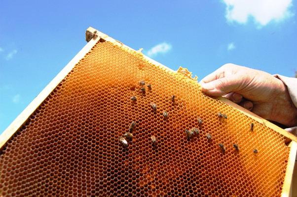 Koji je najbolji način konzumacije propolisa?