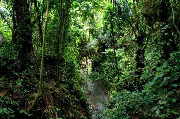 Džungle – srce i pluća Zemlje koja nestaju