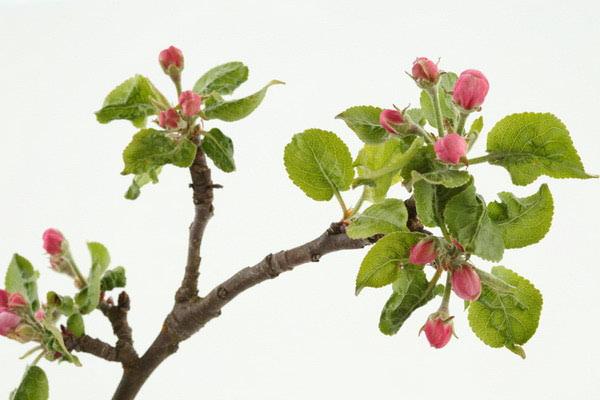 Proljeće – vrijeme za veliko ayurvedsko čišćenje!