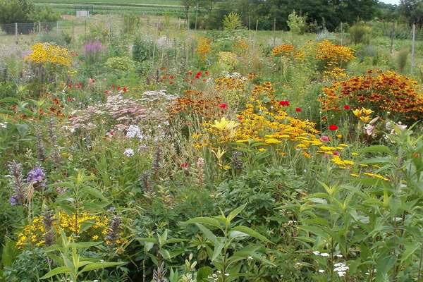 Škola vrtlarenja - napravite svoj biovrt