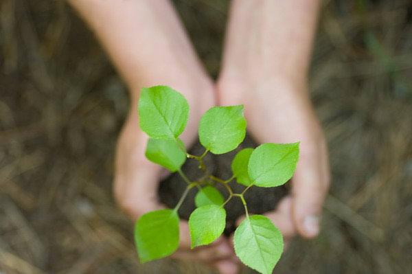 Održivi razvoj, kako ga primijeniti?
