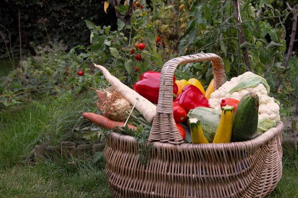 Planiranje vrta - gdje i kako započeti?