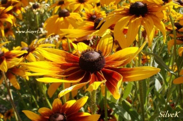 Dani otvorenih vrata Udruge Biovrt – u skladu s prirodom