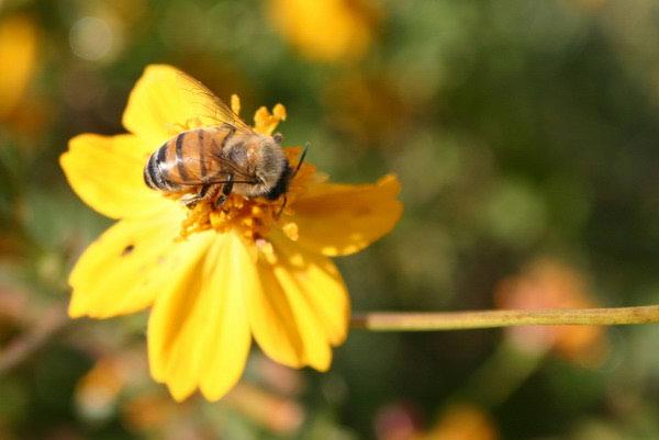 Eko uzgoj biljaka za budućnost pčelarstva