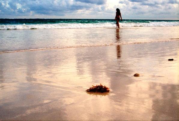 Morske neprilike - opasne meduze i neugodni ježinci