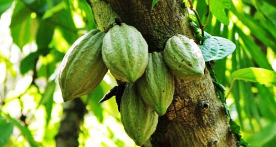 Neodoljivi kakao maslac