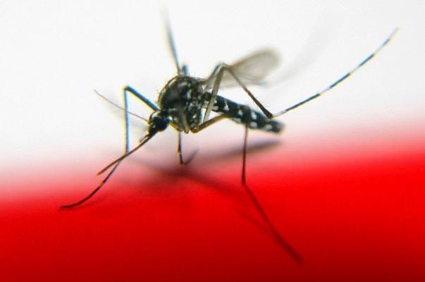Jeste li magnet za komarce?