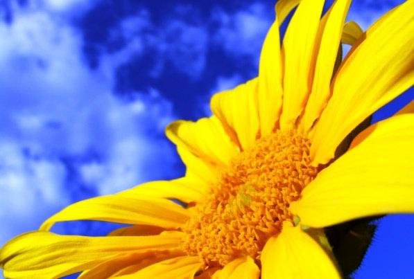 Prirodni pripravci za sunčanje