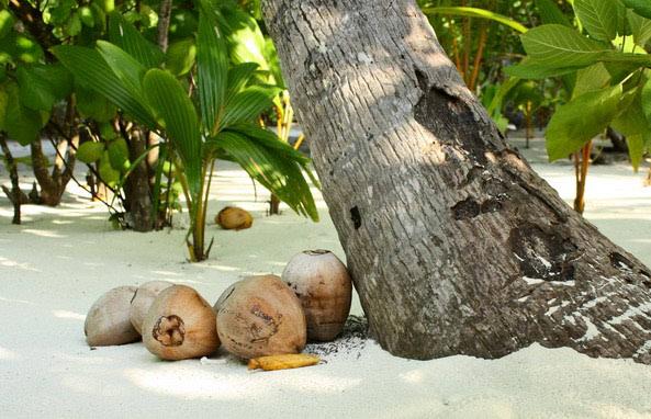 Isprobajte kuhanje na kokosovom ulju!