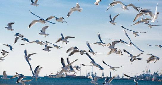 Program očuvanja bioraznolikosti