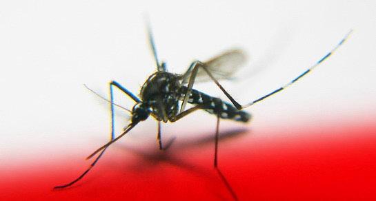 Prirodna zaštita od komaraca