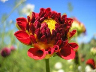 Ehinaceja - sve koristi ove čudotovorne biljke- komentira SilveK