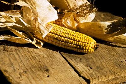 9 žitarica koje ne sadrže gluten